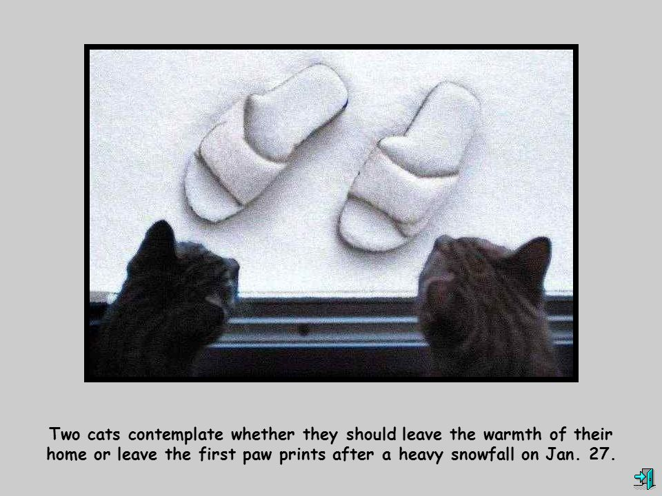 Two cats contemplate whether they should leave the warmth of their home or leave the first paw prints after a heavy snowfall on Jan. 27.