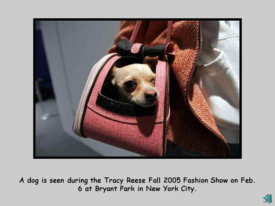 A dog is seen during the Tracy Reese Fall 2005 Fashion Show on Feb. 6 at Bryant Park in New York City.