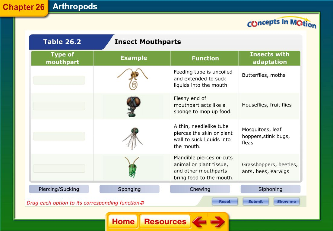 Arthropods  Insects' mouthparts are adapted to the food they eat. 26.3 Insects and Their Relatives Chapter 26