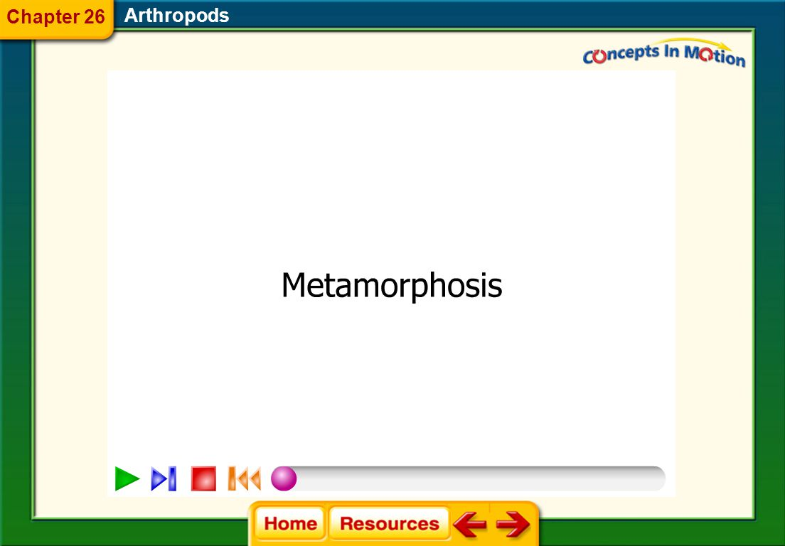 Arthropods Complete Metamorphosis  Most insects develop through the four stages of complete metamorphosis—egg, larva, pupa, and adult. 26.3 Insects a