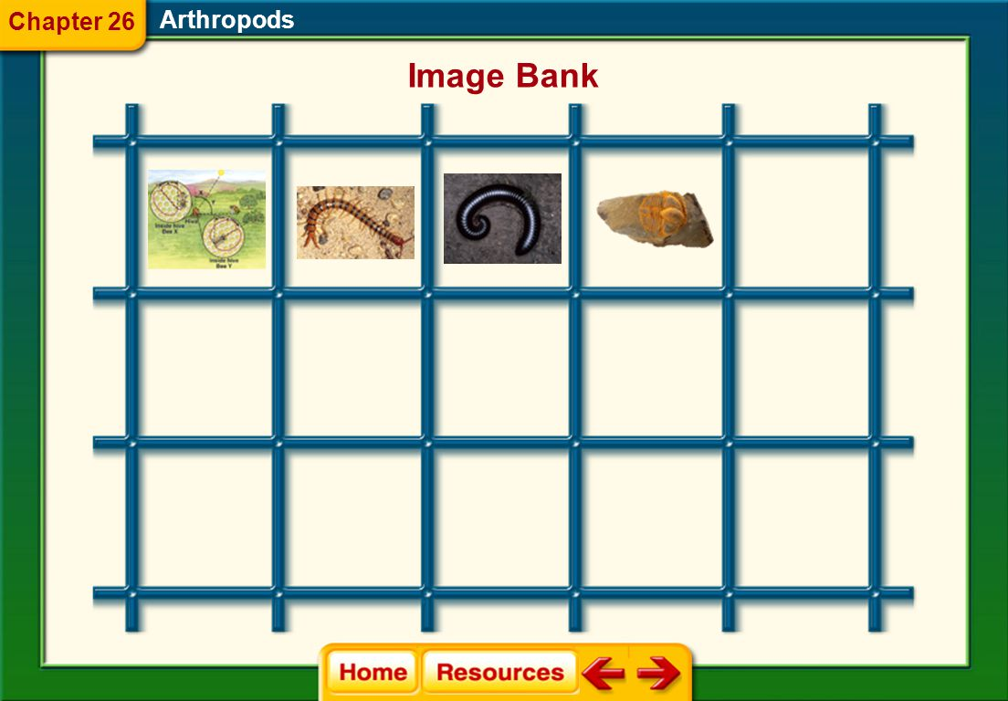 Arthropods Image Bank Chapter 26