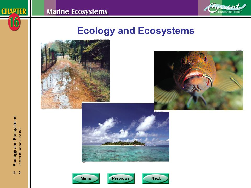MenuPreviousNext 16 - 33 High Productivity Marine Environments nCoastal ecosystems are generally highly productive ecosystems for several reasons.