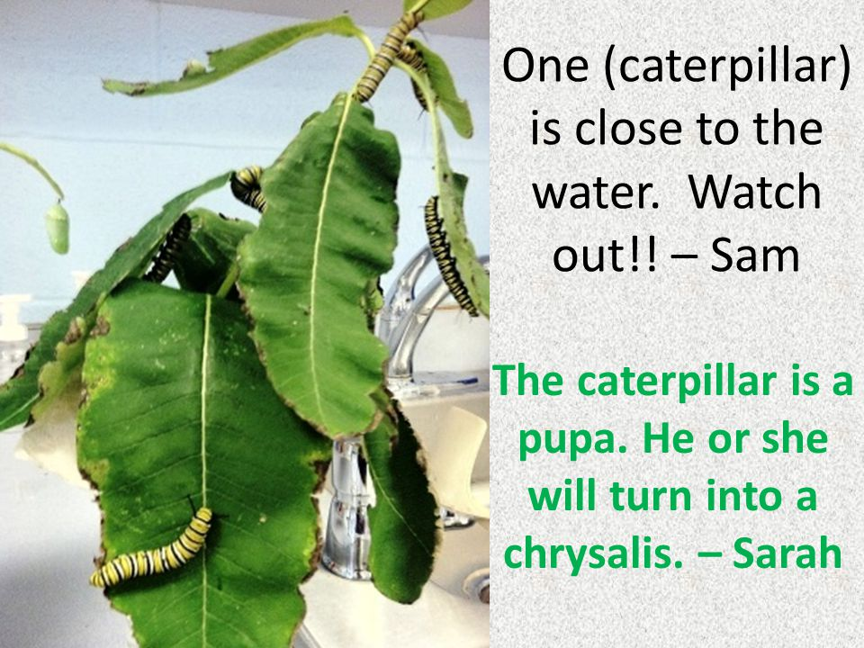 One (caterpillar) is close to the water. Watch out!.