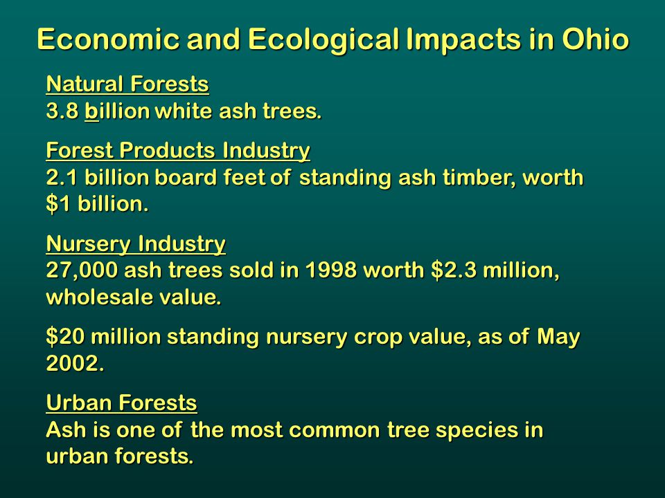 Natural Forests 3.8 billion white ash trees. Forest Products Industry 2.1 billion board feet of standing ash timber, worth $1 billion. Nursery Industr