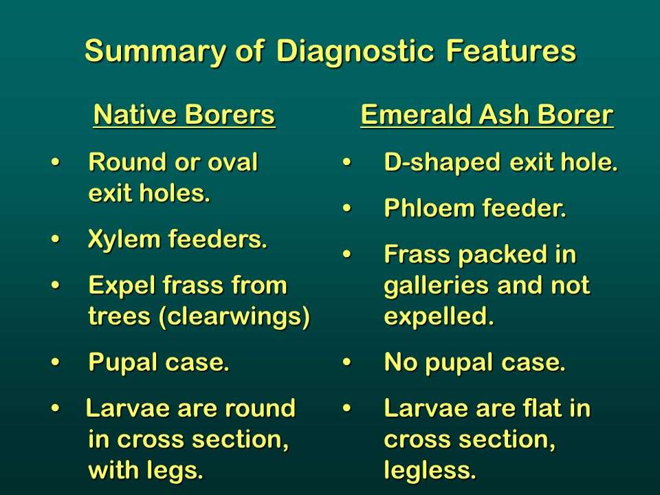 Summary of Diagnostic Features Native Borers Round or oval exit holes. Round or oval exit holes. Xylem feeders.Xylem feeders. Expel frass from trees (