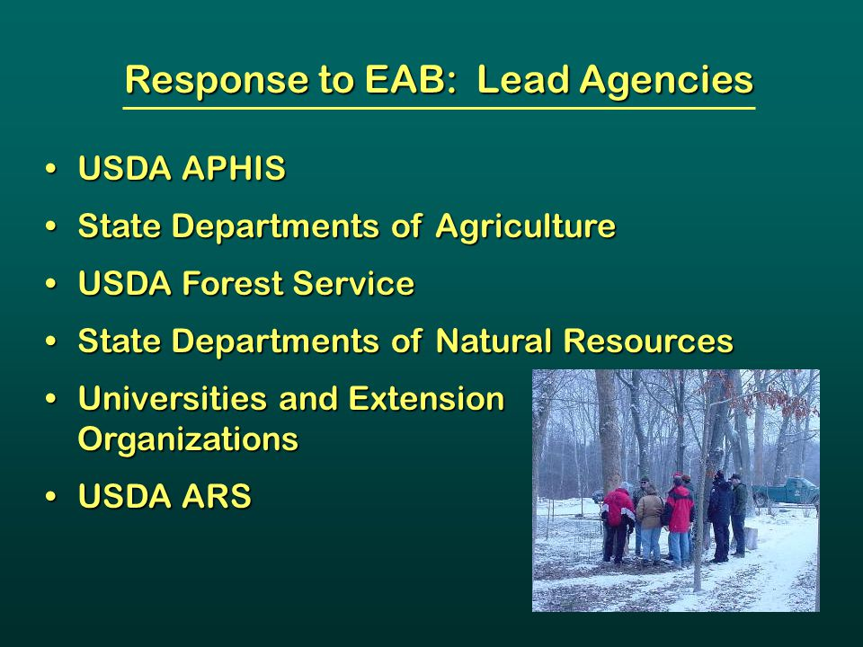 Response to EAB: Lead Agencies USDA APHISUSDA APHIS State Departments of AgricultureState Departments of Agriculture USDA Forest ServiceUSDA Forest Se