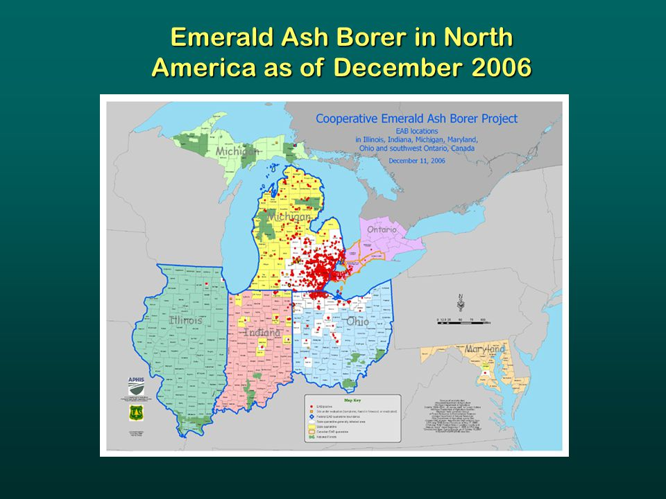 Emerald Ash Borer in North America as of December 2006