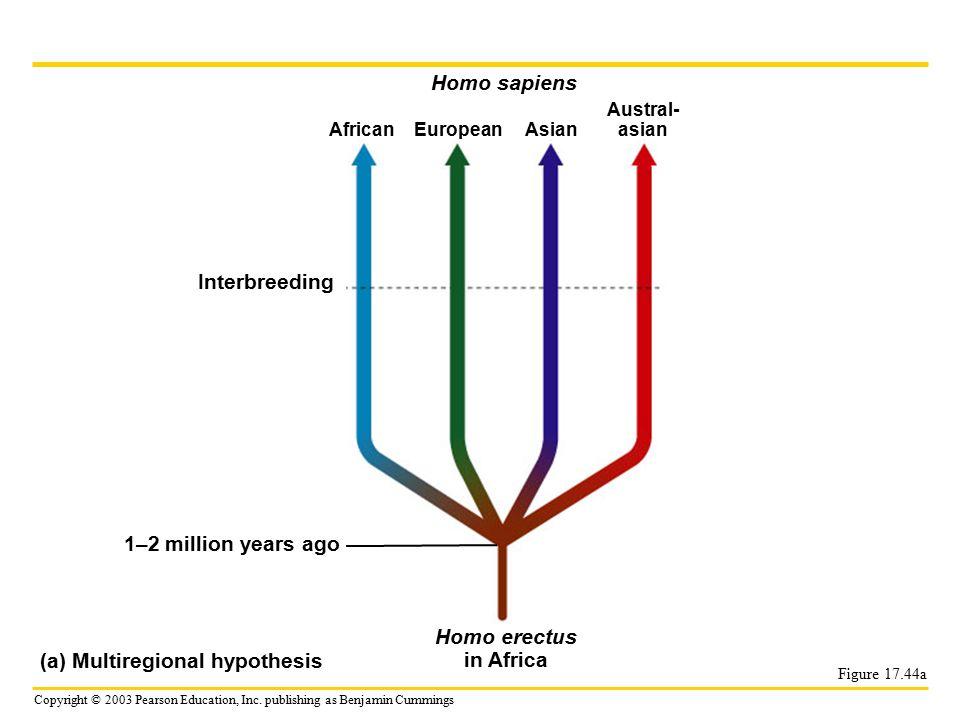 Copyright © 2003 Pearson Education, Inc. publishing as Benjamin Cummings Figure 17.44a Interbreeding 1–2 million years ago Homo sapiens AfricanEuropea