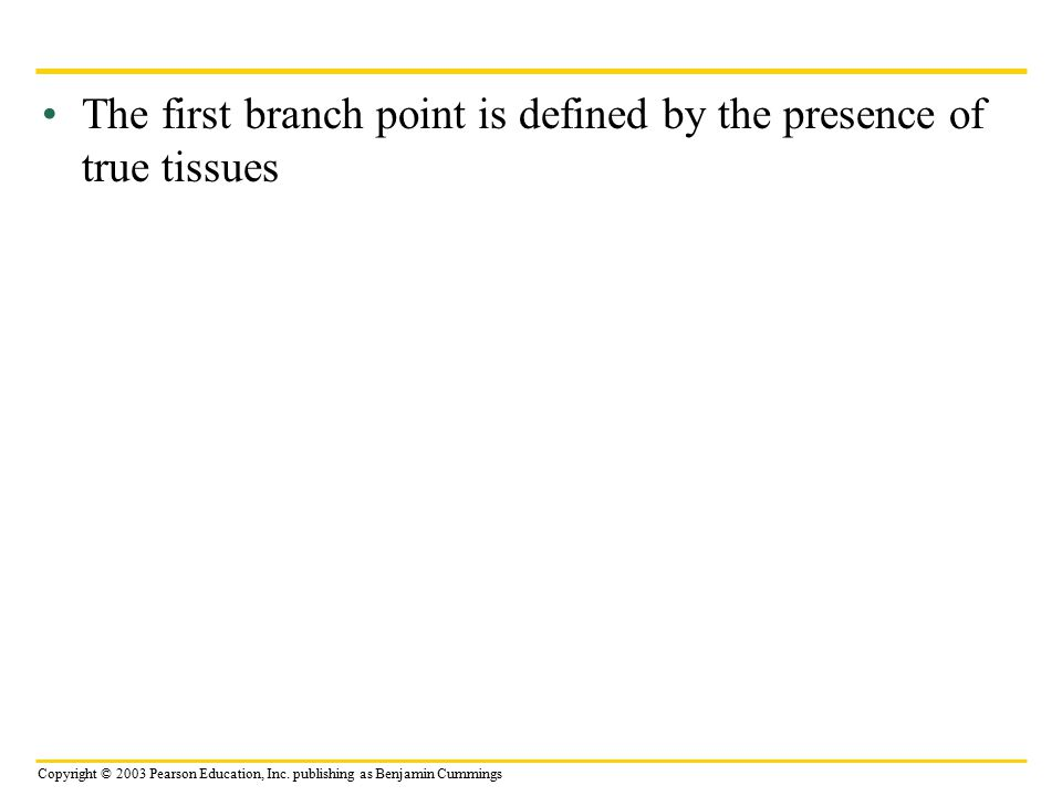 Copyright © 2003 Pearson Education, Inc. publishing as Benjamin Cummings The first branch point is defined by the presence of true tissues