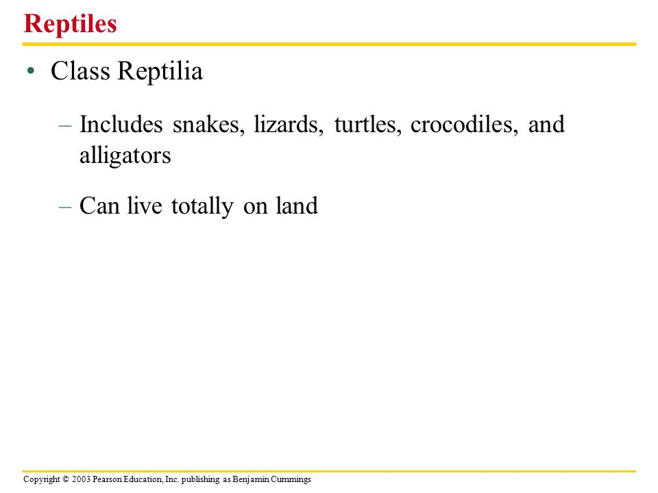 Copyright © 2003 Pearson Education, Inc. publishing as Benjamin Cummings Class Reptilia Reptiles –Includes snakes, lizards, turtles, crocodiles, and a