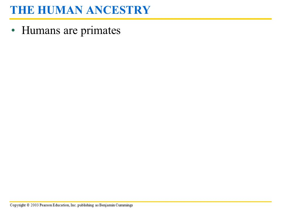 Copyright © 2003 Pearson Education, Inc. publishing as Benjamin Cummings Humans are primates THE HUMAN ANCESTRY
