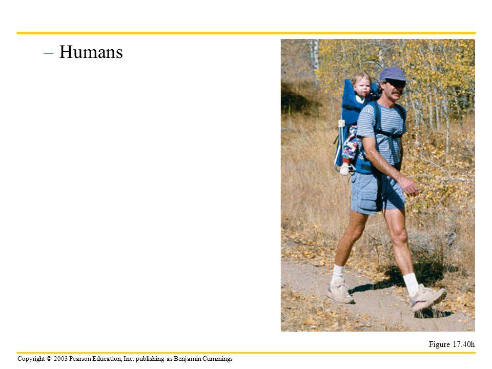 Copyright © 2003 Pearson Education, Inc. publishing as Benjamin Cummings –Humans Figure 17.40h