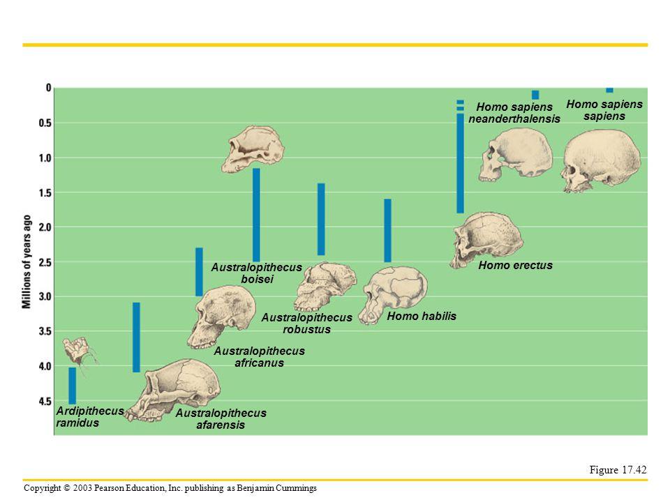 Copyright © 2003 Pearson Education, Inc. publishing as Benjamin Cummings Figure 17.42 Ardipithecus ramidus Australopithecus afarensis Australopithecus