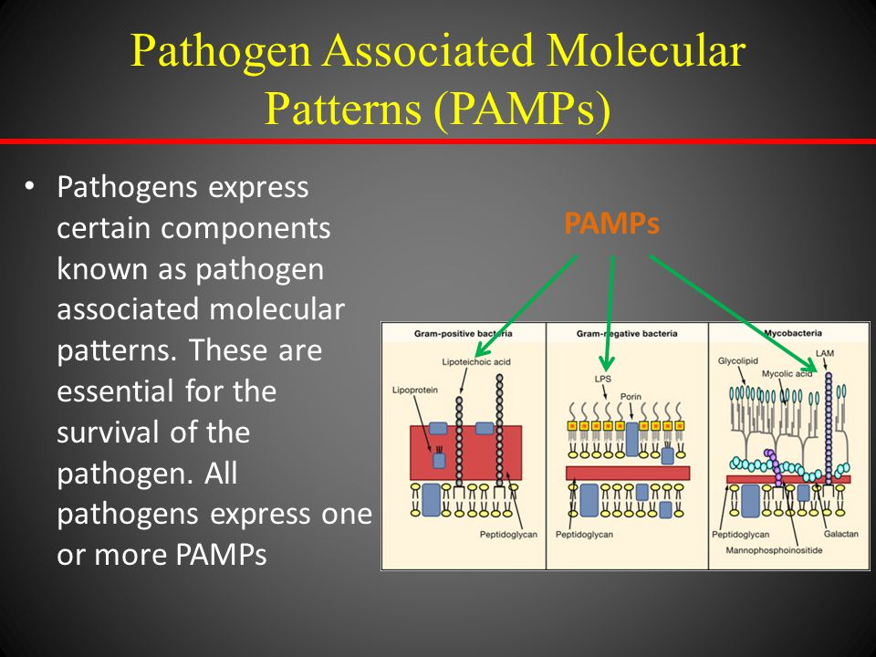 Pathogen Associated Molecular Patterns (PAMPs) Pathogens express certain components known as pathogen associated molecular patterns. These are essenti