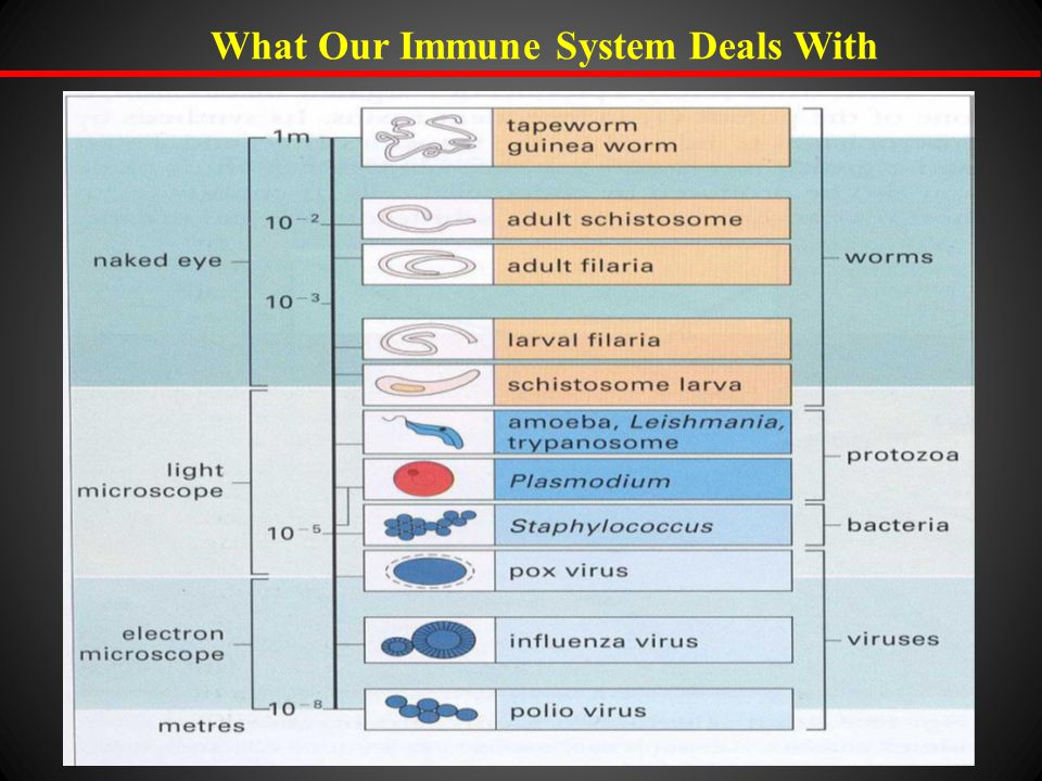 What Our Immune System Deals With