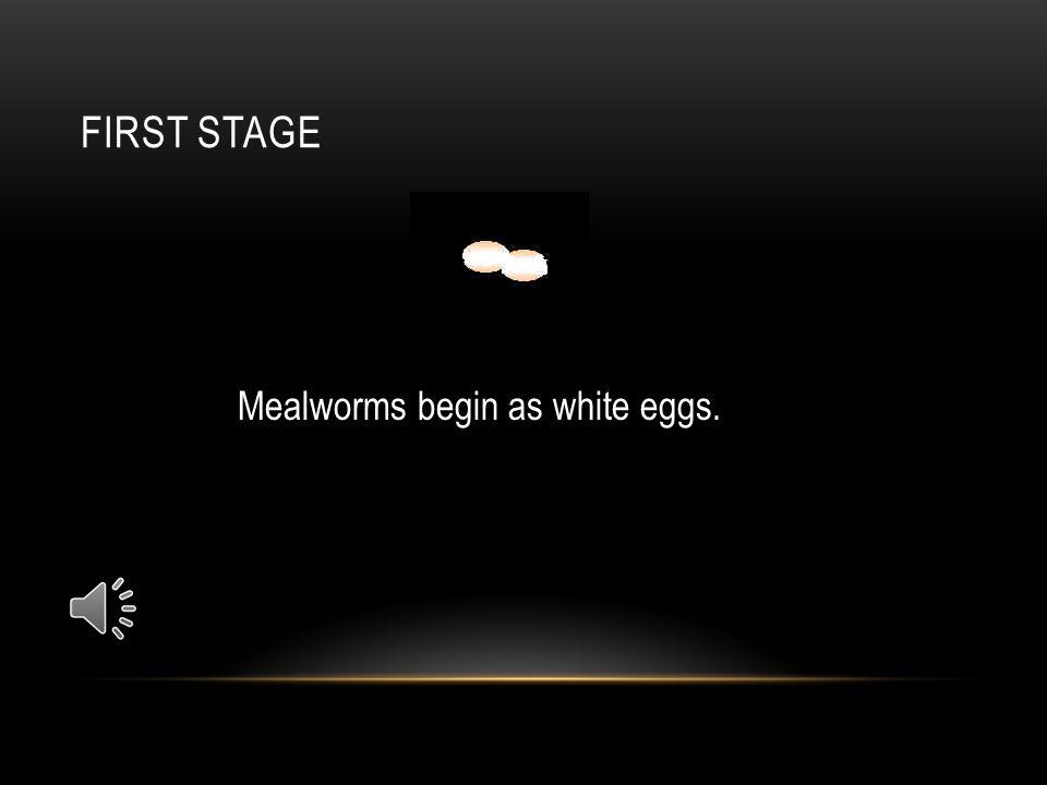 HUMAN HABITATS Mealworms prefer a warm habitat.