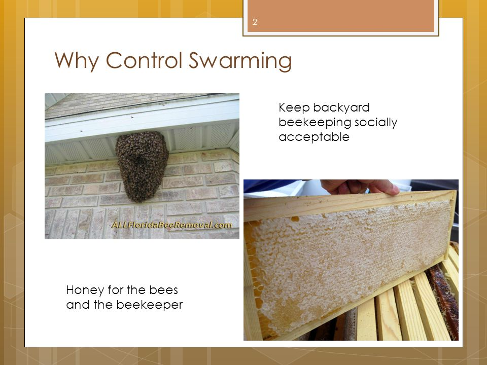 Why Control Swarming Keep backyard beekeeping socially acceptable Honey for the bees and the beekeeper 2