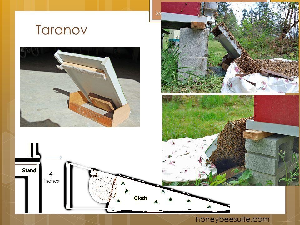 Taranov 4 inches honeybeesuite.com 26