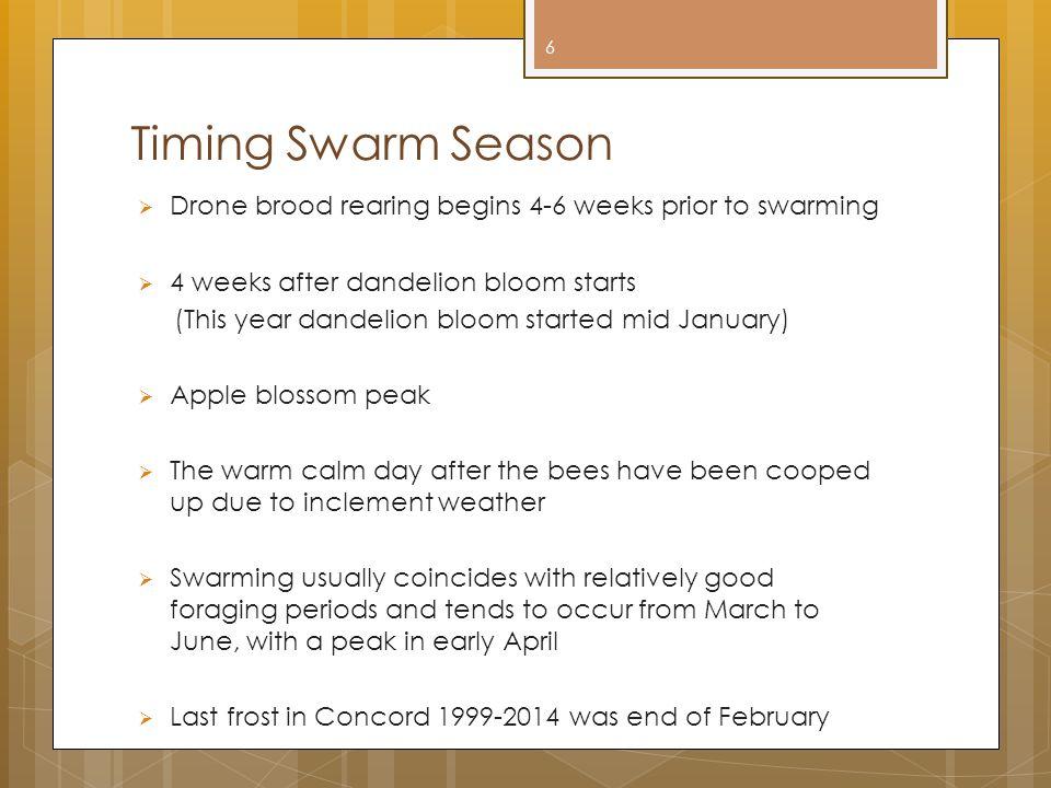 Timing Swarm Season  Drone brood rearing begins 4-6 weeks prior to swarming  4 weeks after dandelion bloom starts (This year dandelion bloom started