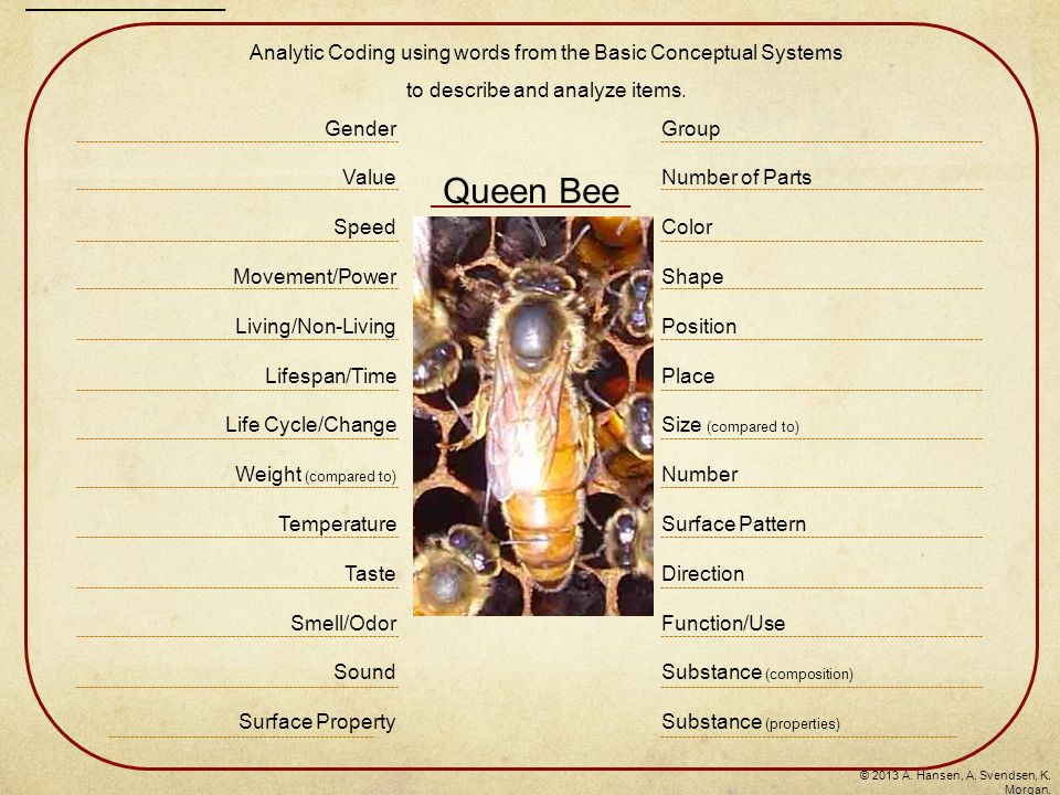 Queen Bee Group Number of Parts Color Shape Position Place Size (compared to) Number Surface Pattern Direction Function/Use Substance (composition) Substance (properties) Gender Value Speed Movement/Power Living/Non-Living Lifespan/Time Life Cycle/Change Weight (compared to) Temperature Taste Smell/Odor Sound Surface Property Analytic Coding using words from the Basic Conceptual Systems to describe and analyze items.