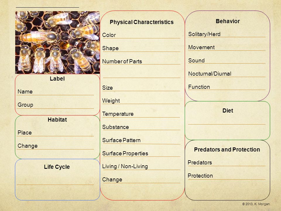Queen BeeWorker Bee Similarities & Differences Circle the words in which the two items are similar.