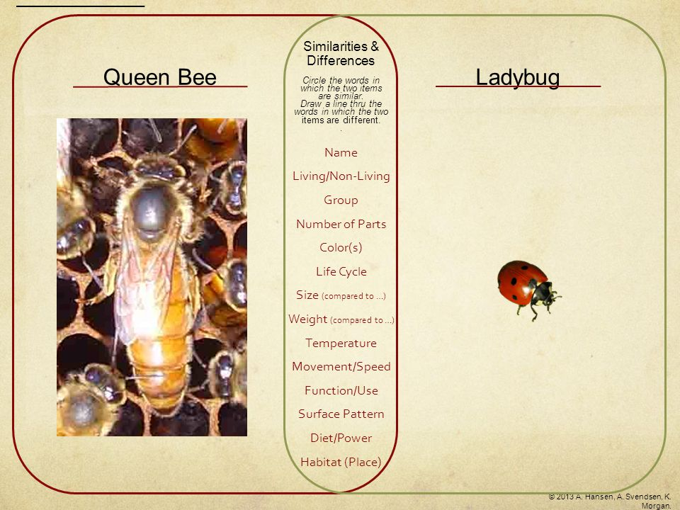 Queen BeeLadybug Similarities & Differences Circle the words in which the two items are similar.