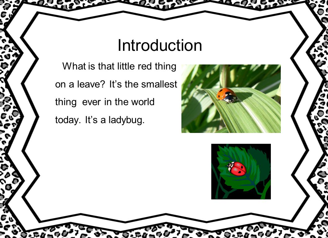 Introduction What is that little red thing on a leave? It's the smallest thing ever in the world today. It's a ladybug.