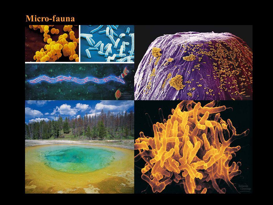 Micro-fauna