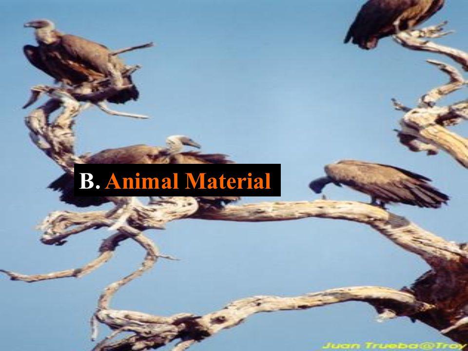 B. Animal Material