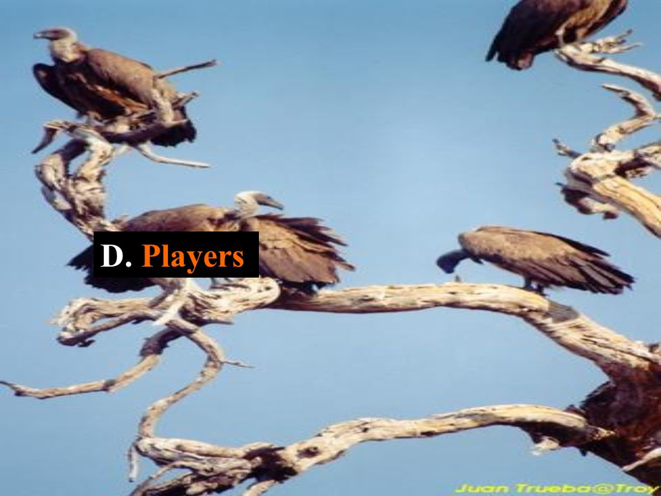 D. Players