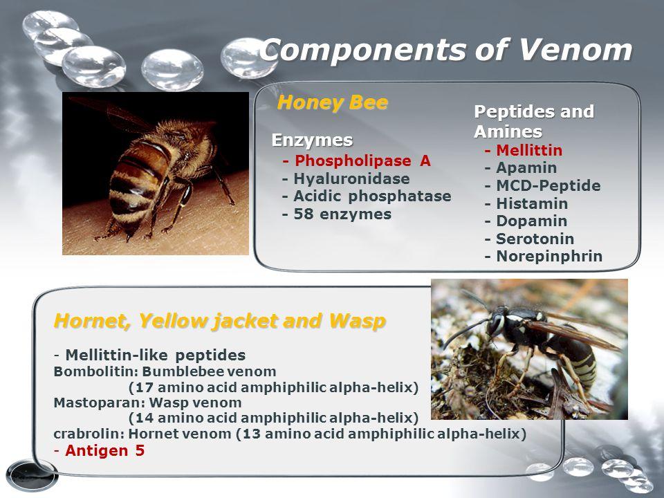Components of Venom Peptides and Amines - Mellittin - Apamin - MCD-Peptide - Histamin - Dopamin - Serotonin - Norepinphrin Enzymes Enzymes - Phospholi
