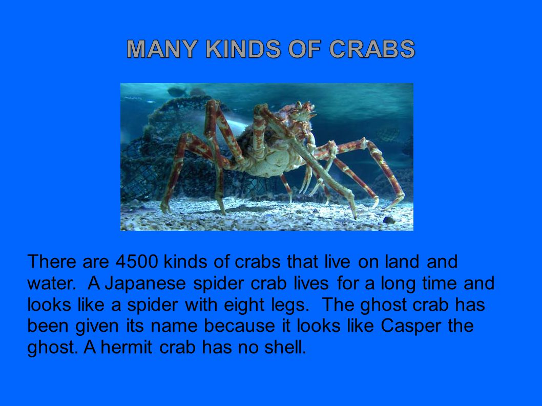 There are 4500 kinds of crabs that live on land and water.