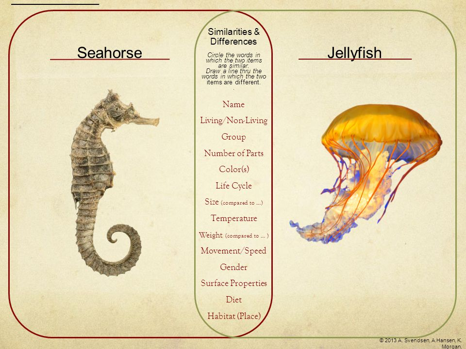 SeahorseJellyfish Similarities & Differences Circle the words in which the two items are similar. Draw a line thru the words in which the two items ar