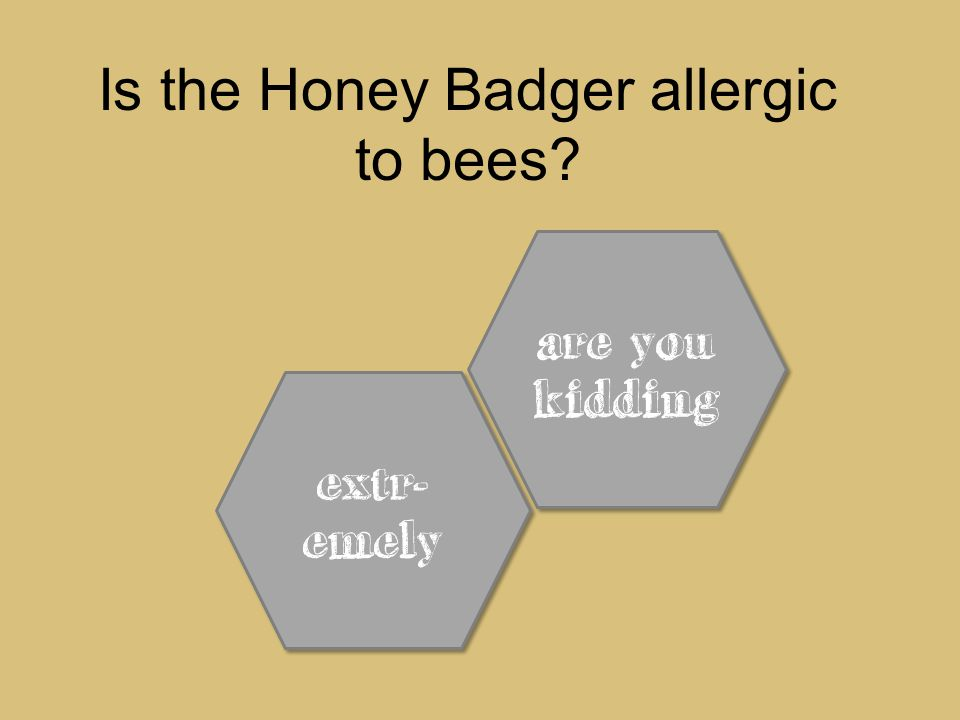 extr- emely extr- emely are you kidding are you kidding Is the Honey Badger allergic to bees