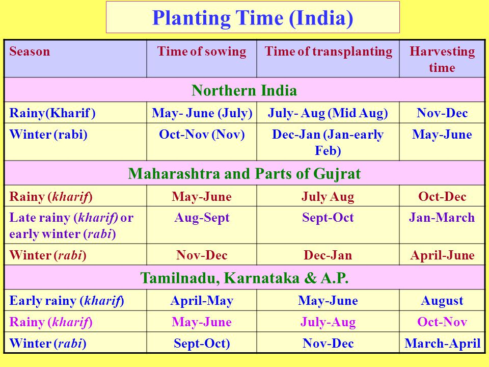 Planting Time (India) SeasonTime of sowingTime of transplantingHarvesting time Northern India Rainy(Kharif )May- June (July)July- Aug (Mid Aug)Nov-Dec Winter (rabi)Oct-Nov (Nov)Dec-Jan (Jan-early Feb) May-June Maharashtra and Parts of Gujrat Rainy (kharif)May-JuneJuly AugOct-Dec Late rainy (kharif) or early winter (rabi) Aug-SeptSept-OctJan-March Winter (rabi)Nov-DecDec-JanApril-June Tamilnadu, Karnataka & A.P.