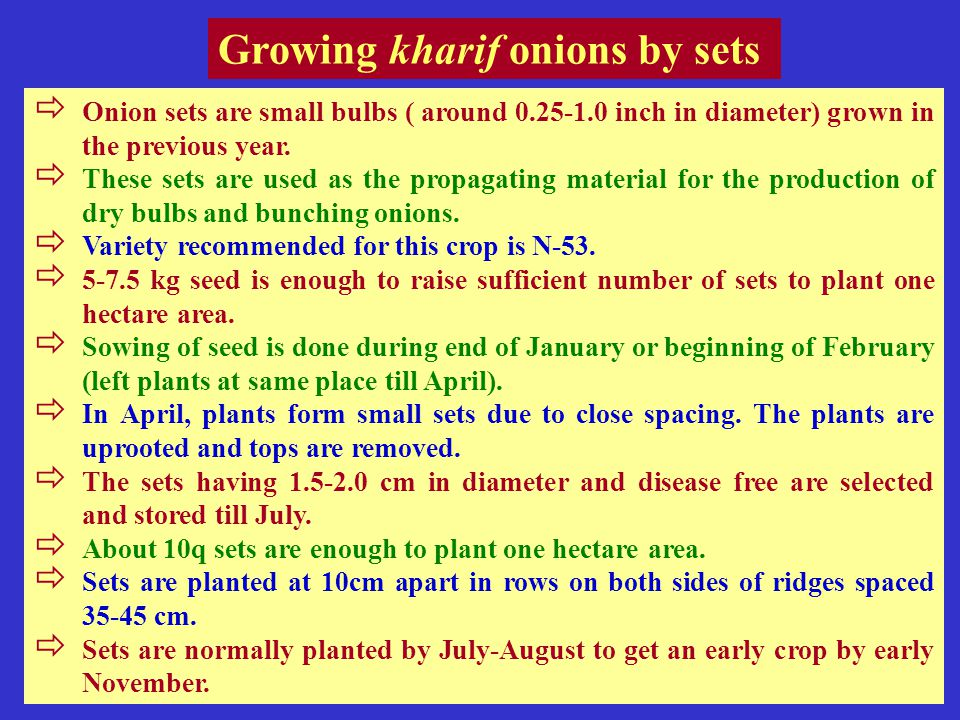 Growing kharif onions by sets  Onion sets are small bulbs ( around 0.25-1.0 inch in diameter) grown in the previous year.