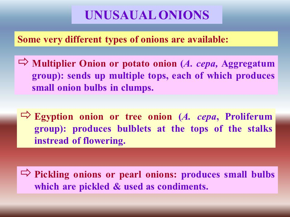 UNUSAUAL ONIONS Some very different types of onions are available:  Multiplier Onion or potato onion (A.