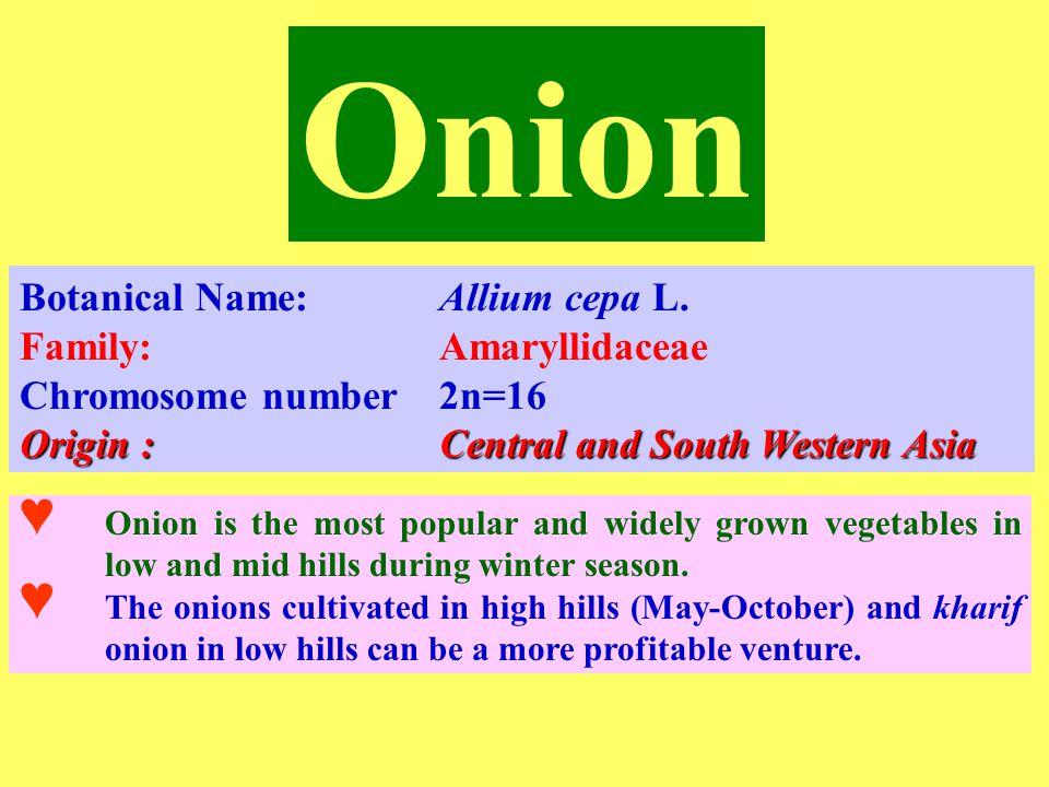 Onion Smut ☻ Soil borne disease.