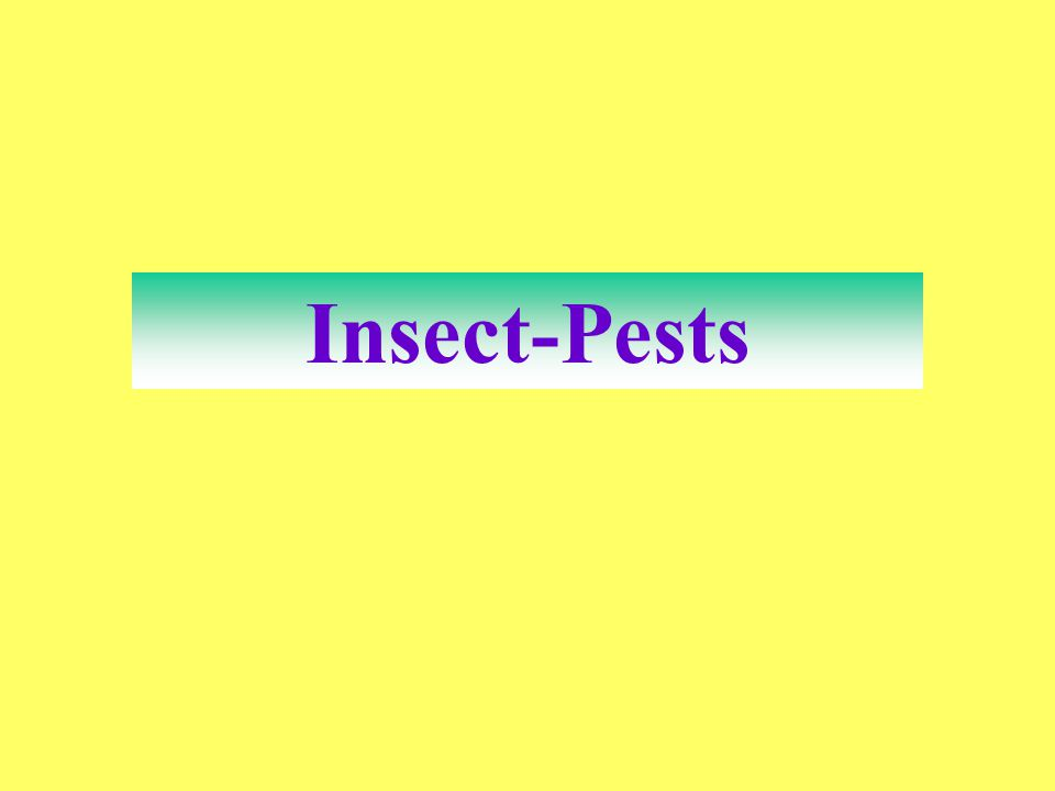 Insect-Pests