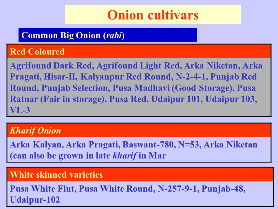 Onion cultivars Common Big Onion (rabi) Red Coloured Agrifound Dark Red, Agrifound Light Red, Arka Niketan, Arka Pragati, Hisar-II, Kalyanpur Red Round, N-2-4-1, Punjab Red Round, Punjab Selection, Pusa Madhavi (Good Storage), Pusa Ratnar (Fair in storage), Pusa Red, Udaipur 101, Udaipur 103, VL-3 Kharif Onion Arka Kalyan, Arka Pragati, Baswant-780, N=53, Arka Niketan (can also be grown in late kharif in Mar White skinned varieties Pusa White Flut, Pusa White Round, N-257-9-1, Punjab-48, Udaipur-102