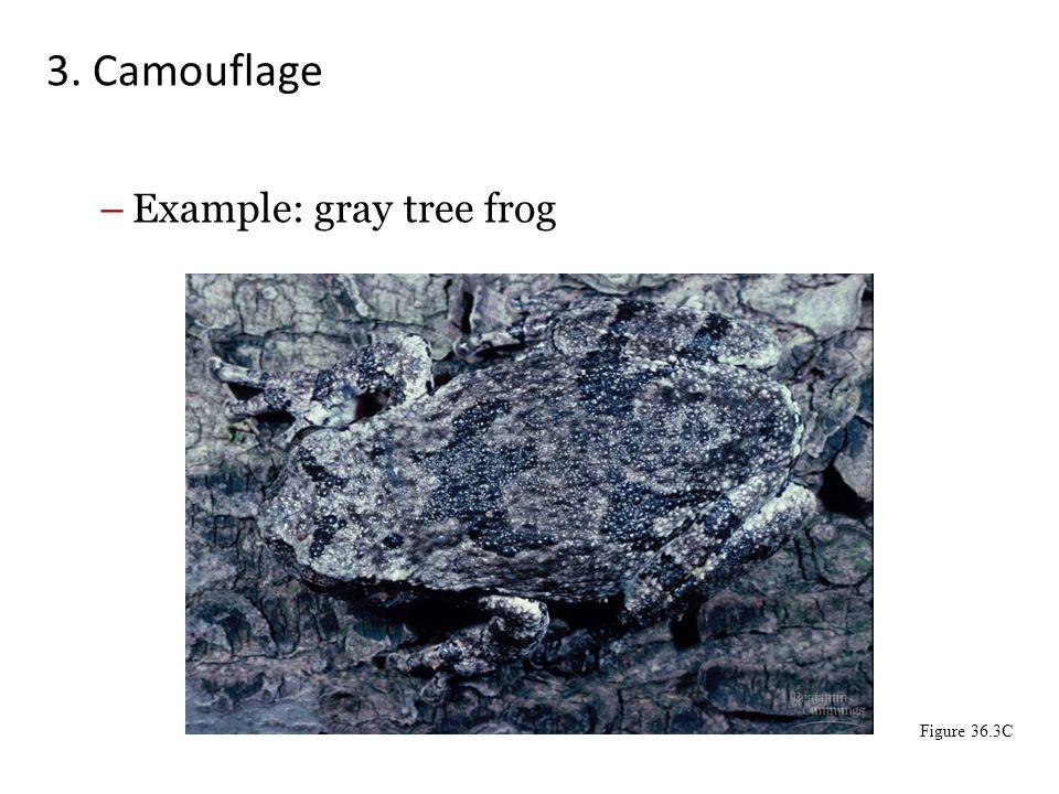3. Camouflage –Example: gray tree frog Figure 36.3C