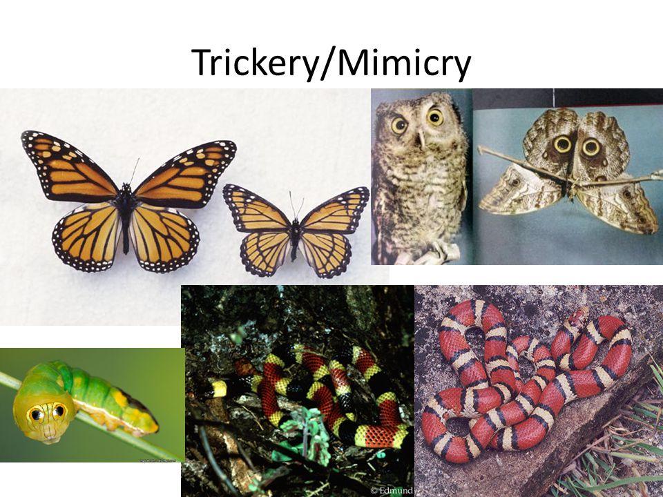 Trickery/Mimicry