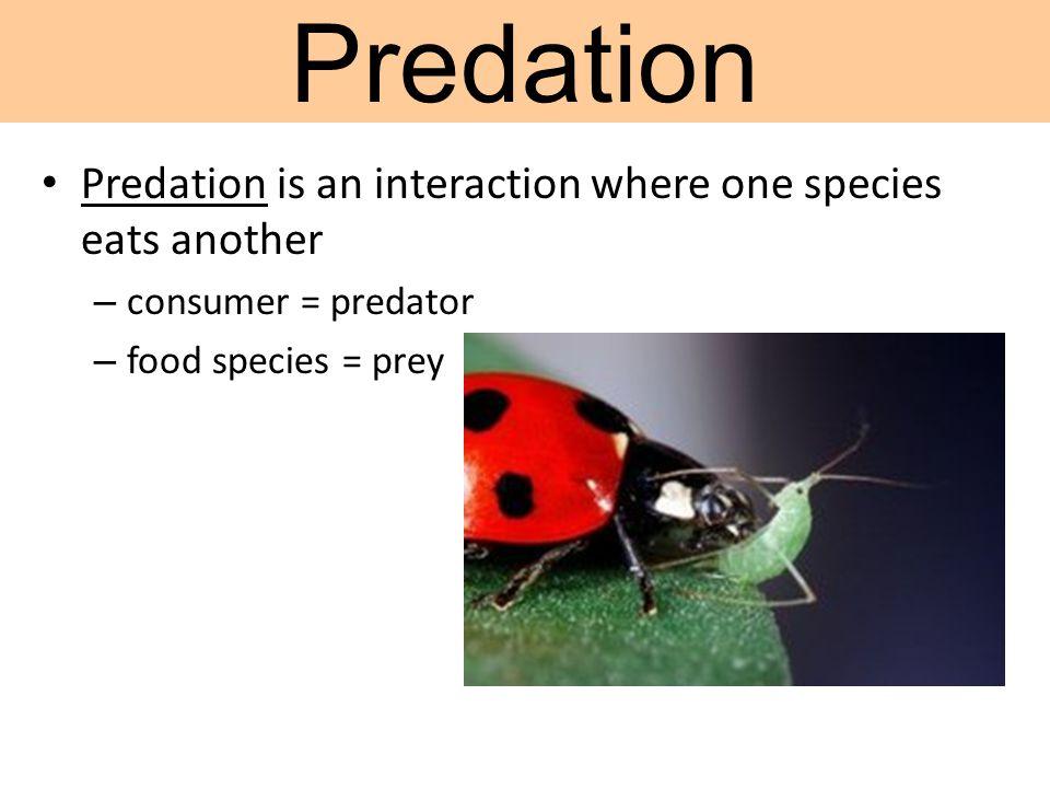 Predation is an interaction where one species eats another – consumer = predator – food species = prey Predation