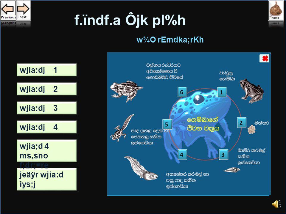wjia:d u; click lrkak f.ueiaidf.a Ôjk pl%h mQ¾K rEmdka;rKh ì;a;r ms,jd lSghd iqyqUq, d