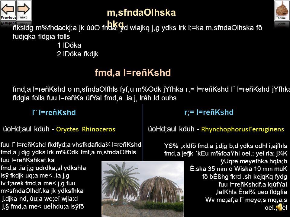 mg mKqjdf.a rEmdka;rKho ñksiqkaf.a wd¾:slh Yla;su;a lsÍug uy;a rel=,la jkq we;.