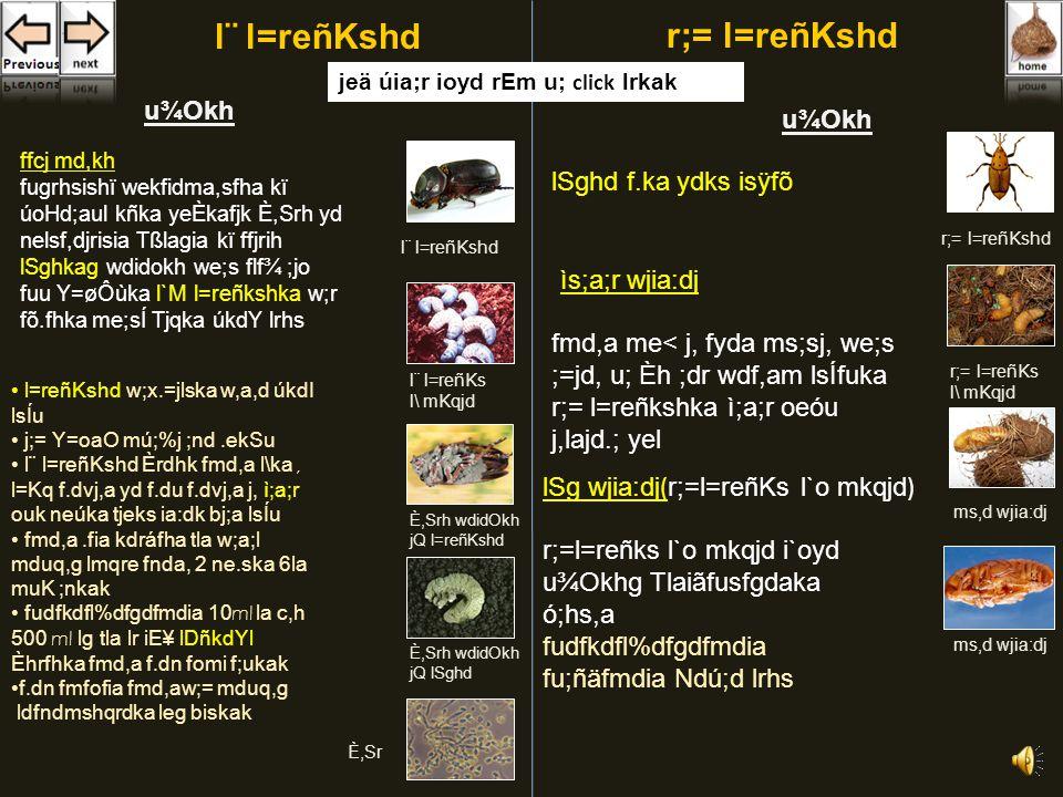 fmd,a l=reñKshd o m,sfndaOlfhls fyf;u m%Odk jYfhka r;= l=reñKshd l¨ l=reñKshd jYfhka fldgia folls fuu l=reñKs úfYaI fmd,a.ia j, lráh ld ouhs l¨ l=reñKshdr;= l=reñKshd úoHd;aul kduh - Oryctes Rhinoceros úoHd;aul kduh - Rhynchophorus Ferruginens fuu l¨ l=reñKshd fkdfyd;a vhsfkdafida¾ l=reñKshd fmd,a j.djg ydks lrk m%Odk fmf,a m,sfndaOlfhls fuu l=reñKshkaf.ka fmd,a.ia j,g udrdka;sl ydkshla isÿ fkdjk uq;a me<.ia j,g ìv f;arek fmd,a me< j,g fuu m<sfndaOlhdf.ka jk ydksfhka j.djka nd, ùu;a we;eï wjia:d j,§ fmd,a me< ueÍhdu;a isÿfõ YS%,xldfõ fmd,a j.djg b;d ydks odhl i;ajfhls fmd,a jefjk ´kEu m%foaYhl oel.; yel rla; j¾K ÿUqre meyefhka hqla;h È.ska 35 mm o Wiska 10 mm muK fõ bÈßhg fkrd.sh kejqKq fydg fuu l=reñKshdf.a iqúfYaI,laIKhls Èref¾ ueo fldgfia Wv me;af;a l¨ meye;s mq,a,s oel.; yel m,sfndaOlhska hkq ñksidg m%fhdackj;a jk úúO fnda.