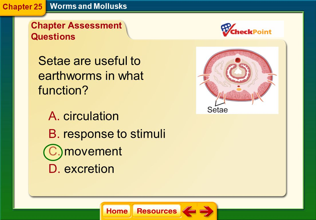Identify the body structure that free-living flatworms use for feeding. A. hooks B. sucker C. pharynx D. cilia Worms and Mollusks Chapter Assessment Q
