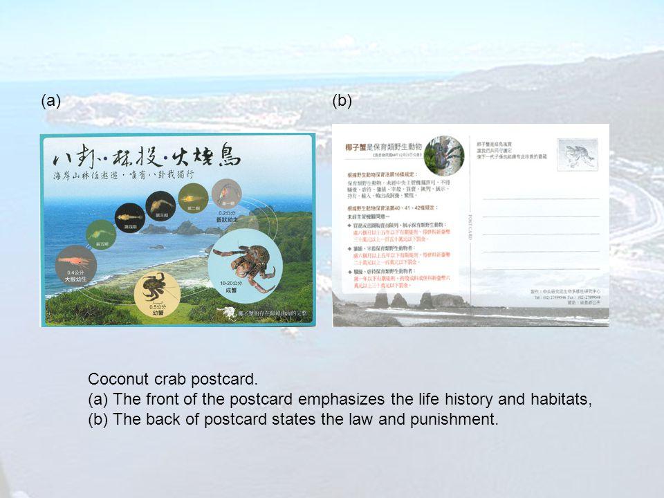 Coconut crab postcard.
