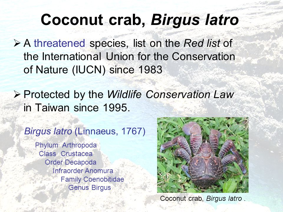  A threatened species, list on the Red list of the International Union for the Conservation of Nature (IUCN) since 1983  Protected by the Wildlife Conservation Law in Taiwan since 1995.