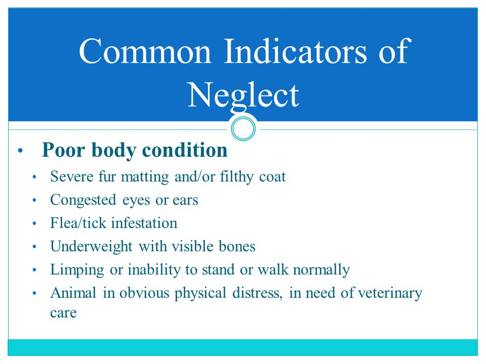 Poor body condition Severe fur matting and/or filthy coat Congested eyes or ears Flea/tick infestation Underweight with visible bones Limping or inability to stand or walk normally Animal in obvious physical distress, in need of veterinary care Common Indicators of Neglect